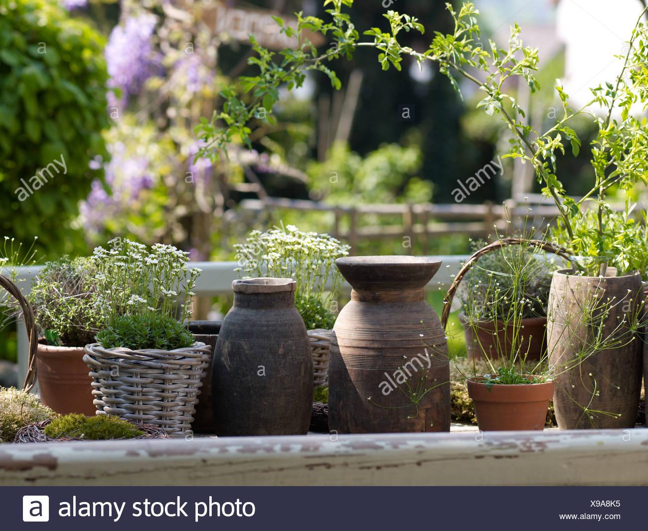 Garten Und Keramik : Stilleben Alte Keramik Vasen Und Blumentöpfe Gemacht  Von Korbwaren
