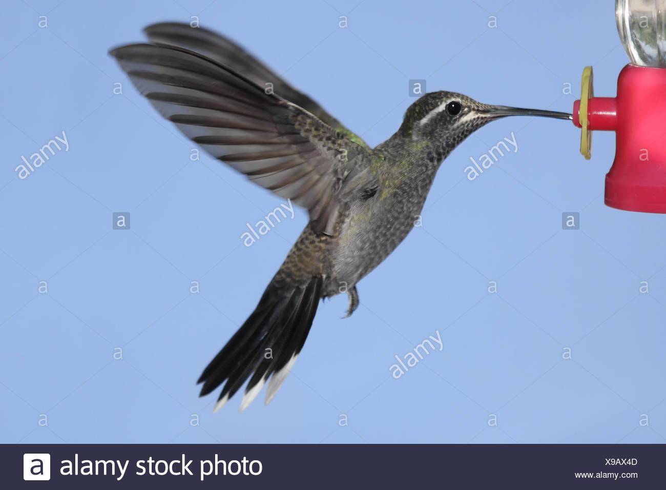 Ausgezeichnet Kolibri Feeder Färbung Seite Fotos - Malvorlagen Von ...