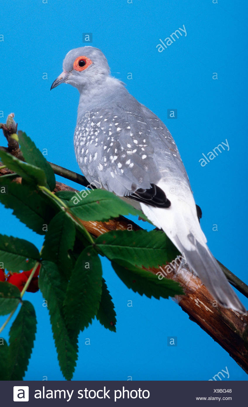 Diamond Dove Stockfoto Bild 281151928 Alamy