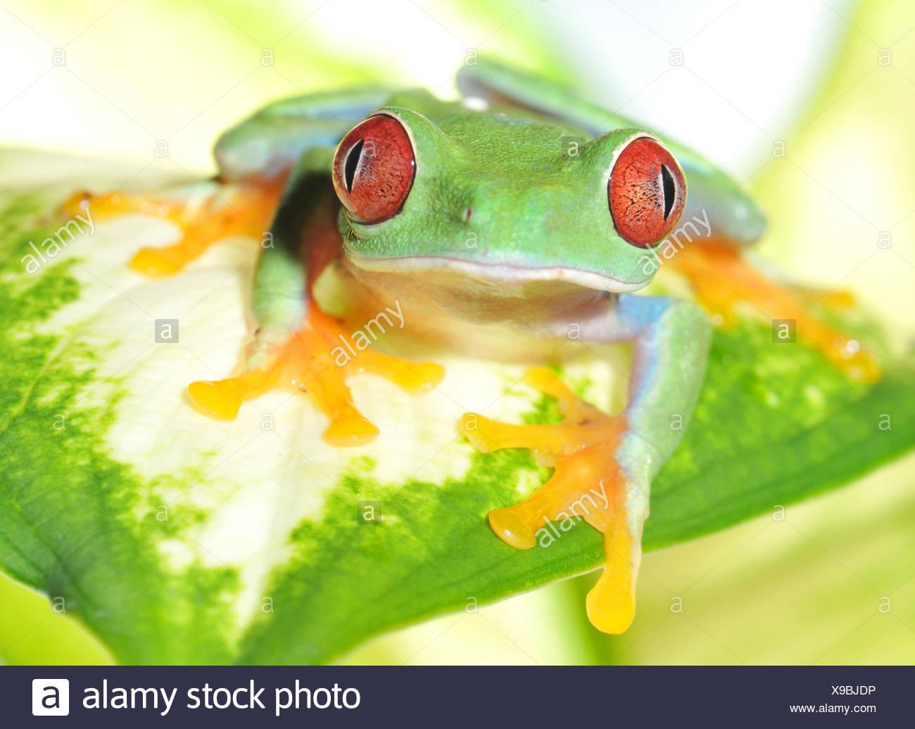 Wunderbar Frosch Zum Einfärben Fotos - Framing Malvorlagen ...
