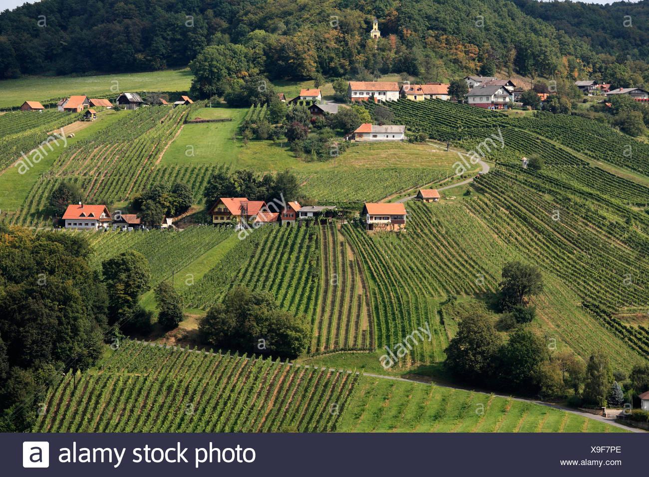 Weinberge Rund Um St Anna Bin Aigen Steiermark österreich Europa