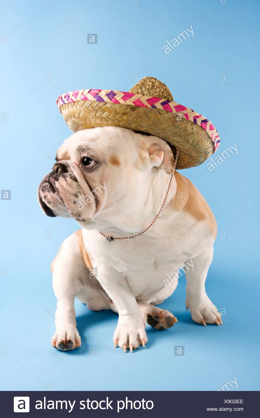 Niedlich Bulldog Färbung Seite Ideen - Druckbare Malvorlagen ...