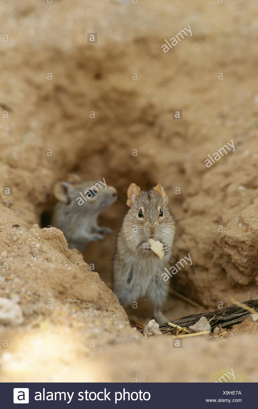 Gemütlich Mäuse Kauen Drähte Fotos - Die Besten Elektrischen ...