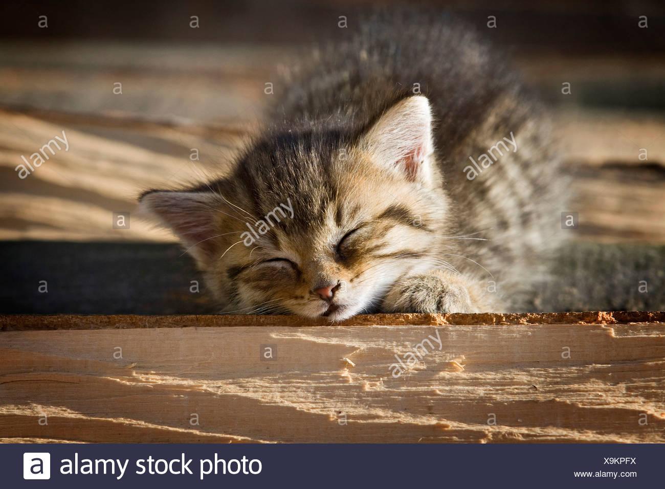 Braun Tabby Kitten Auf Einen Haufen Von Holz In Der Sonne Liegen Und