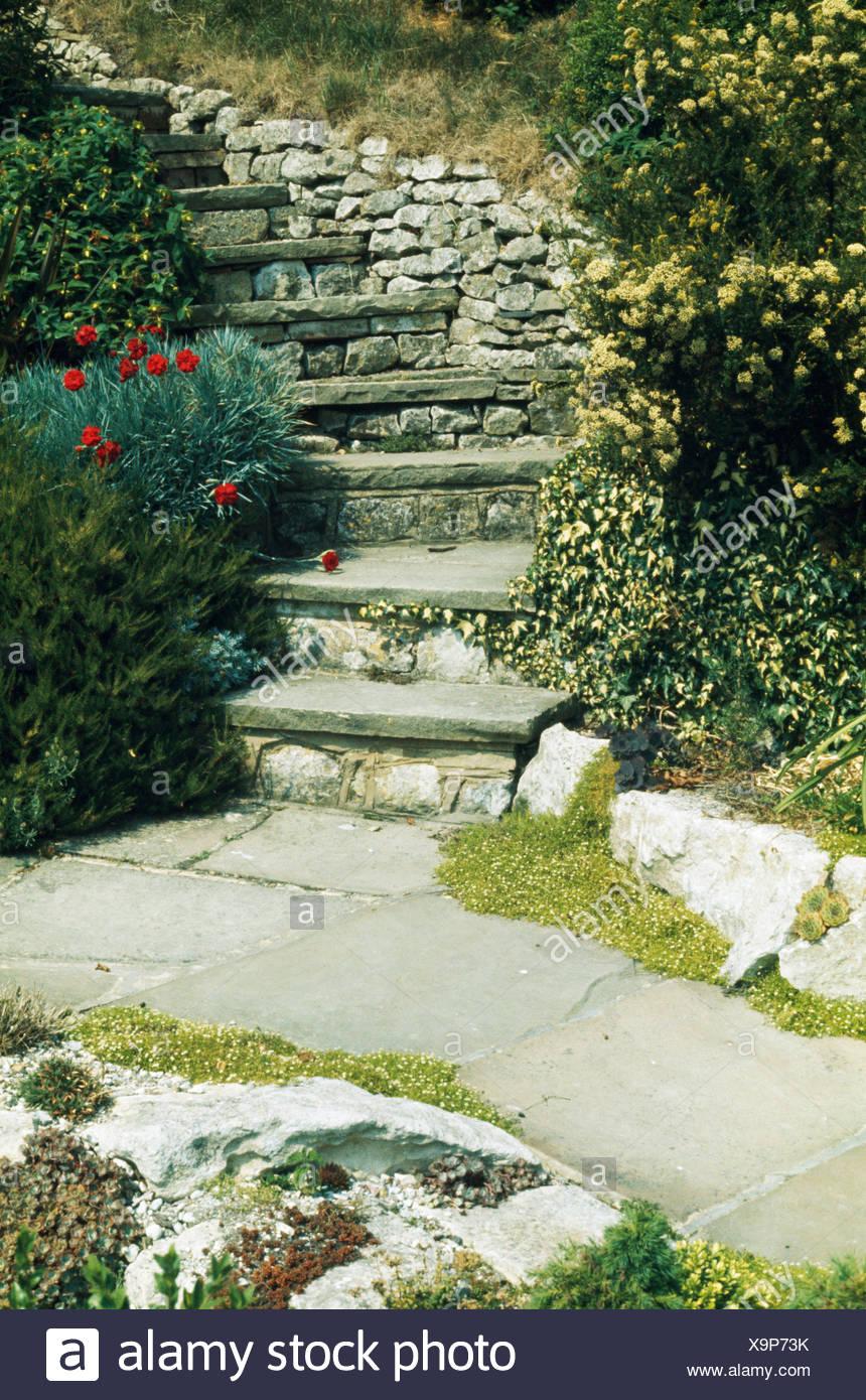 steile steintreppe mit niedrigen pflanzen von rosen, efeu und