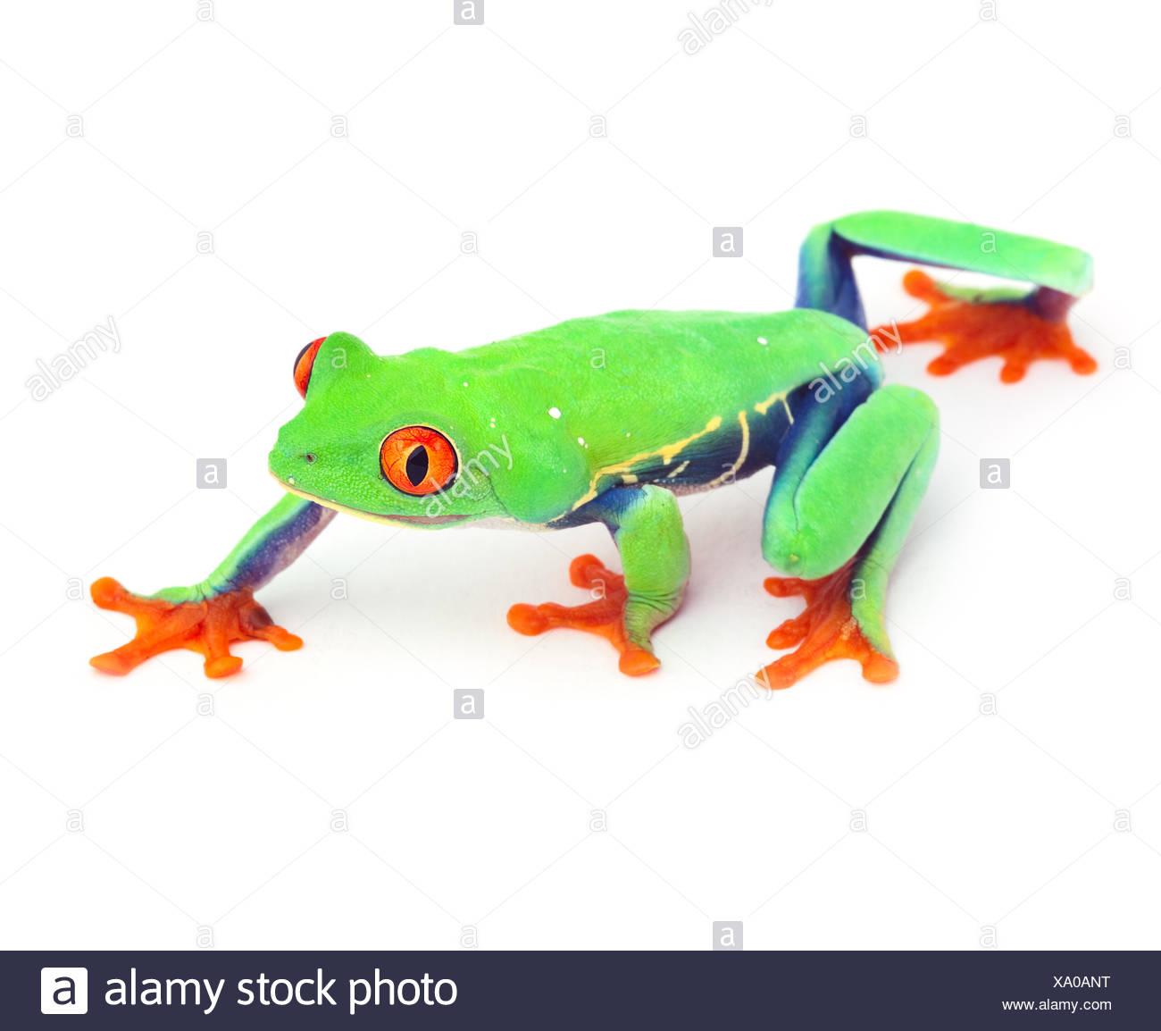 Charmant Frosch Bild Zu Färben Fotos - Druckbare Malvorlagen ...