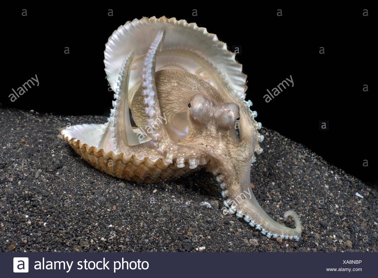 Wunderbar Süße Oktopus Färbung Seite Bilder - Malvorlagen Von Tieren ...