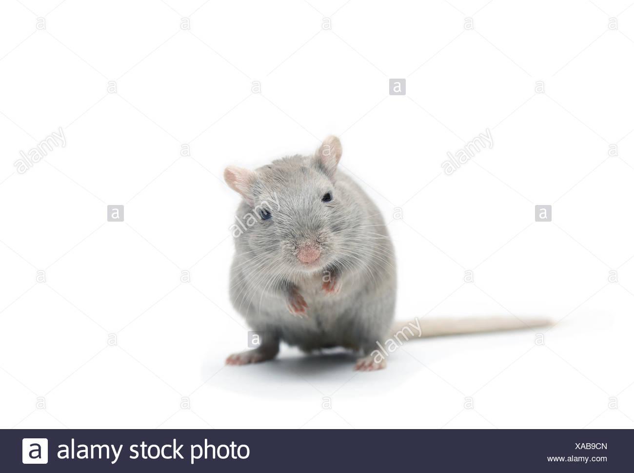 Nett Mäuse Die Elektrischen Draht Essen Fotos - Elektrische ...