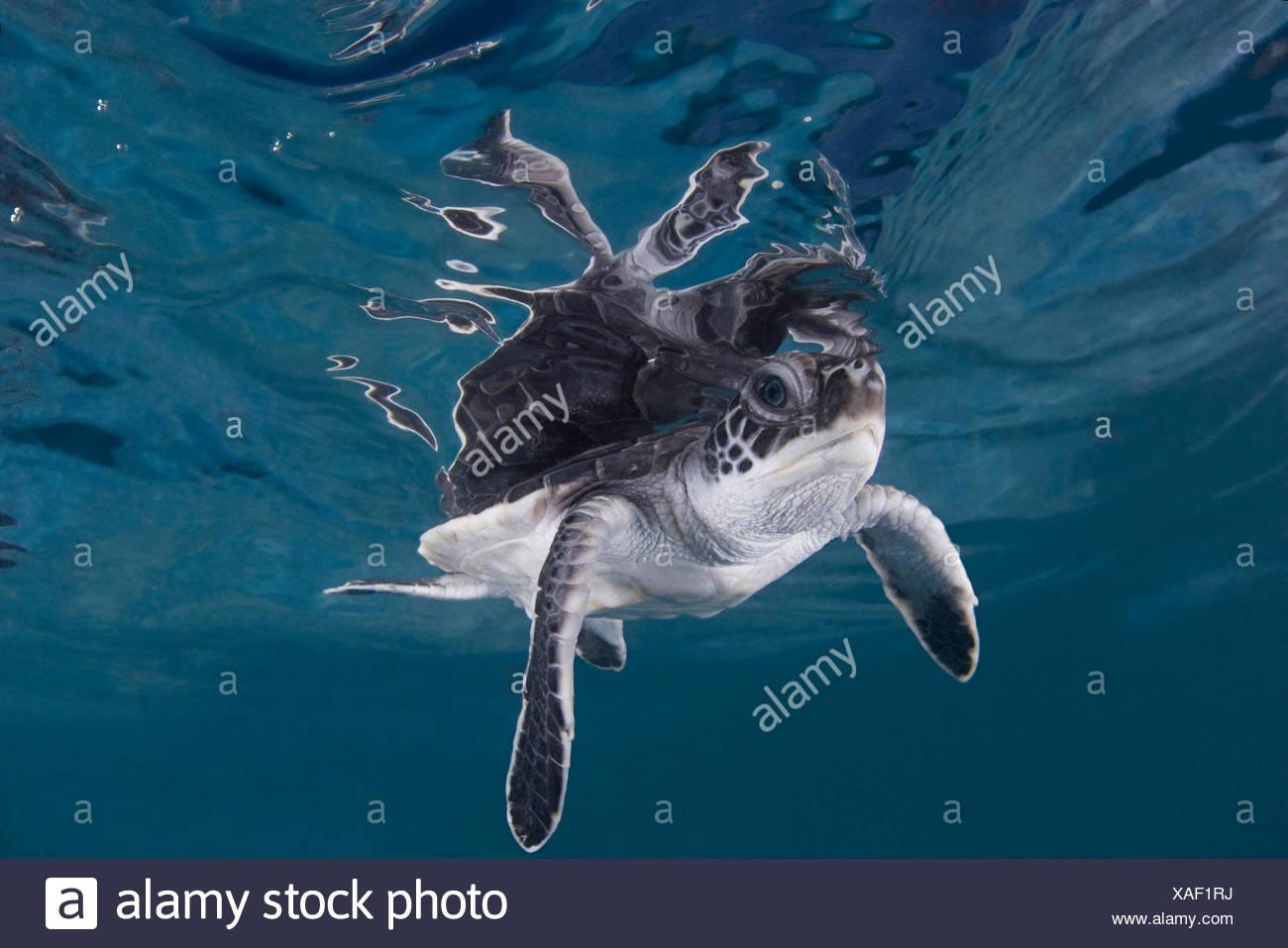 Berühmt Süsse Meeresschildkröte Malvorlagen Zeitgenössisch ...