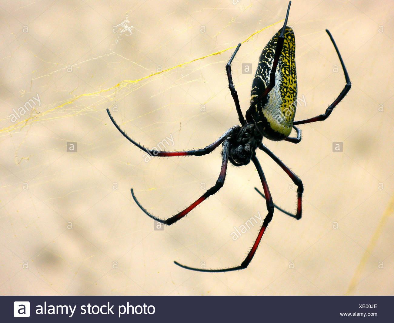 Niedlich Spinnen Kartenvorlage Zeitgenössisch - Beispiel ...