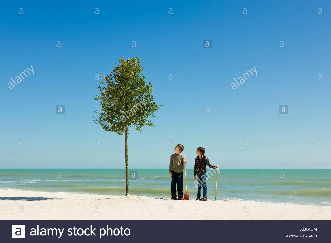 Kinder stehen mit Schaufeln neben Baum gepflanzt am Strand Stockfoto ...