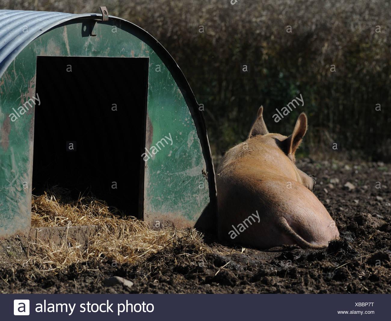 Wunderbar Garten Schwein Draht Fotos - Die Besten Elektrischen ...