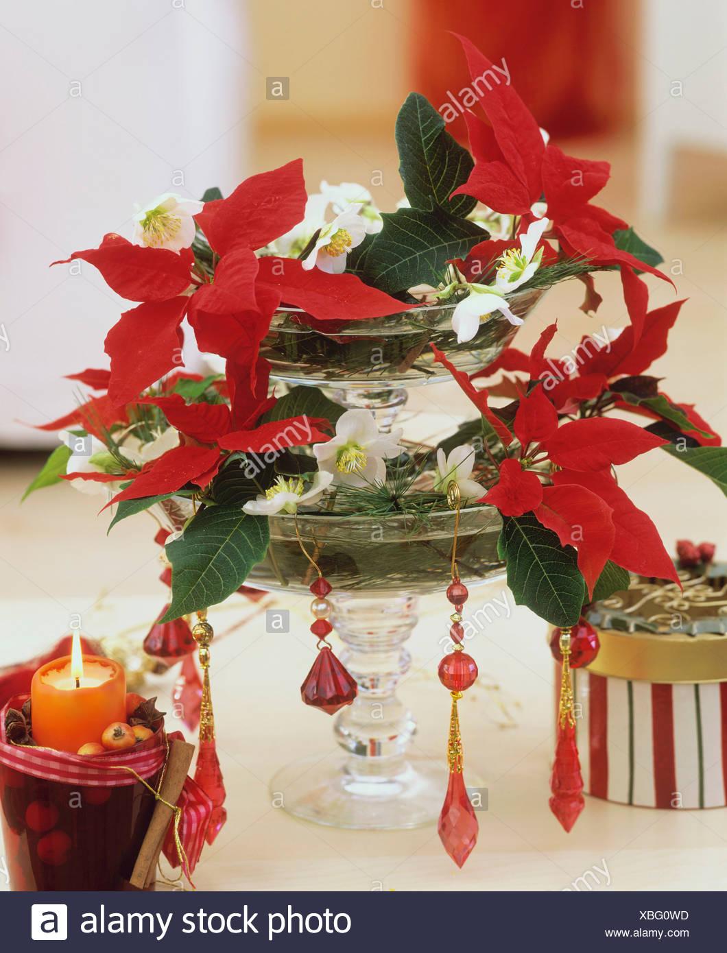 Abgestufte Glas Stand mit Weihnachten Rosen und Weihnachtssterne ...