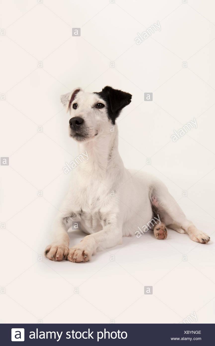 Fox Terrier Dog Stockfotos & Fox Terrier Dog Bilder - Seite 2 - Alamy