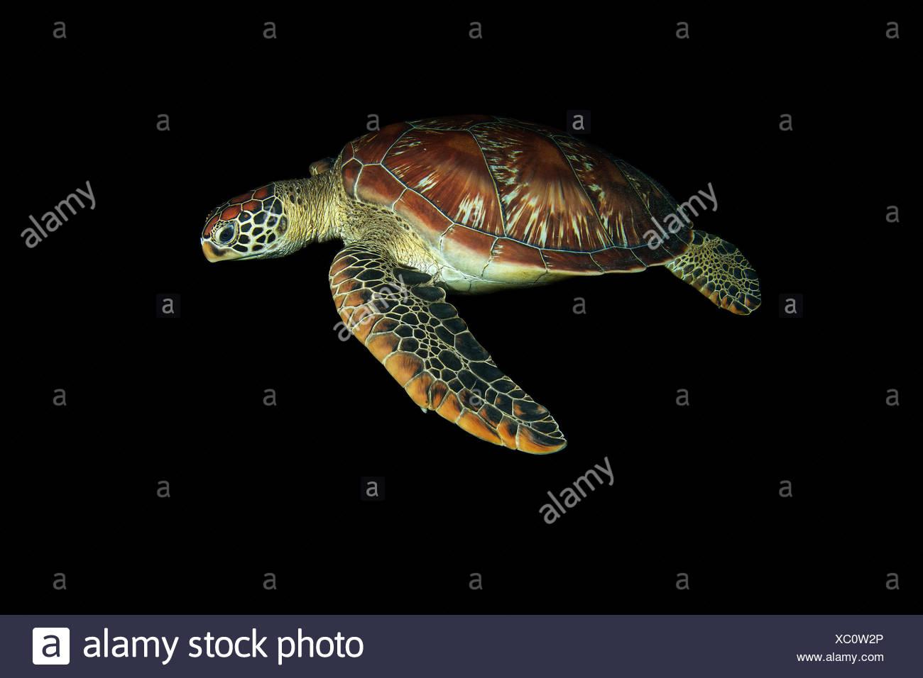 Beste Nemo Meeresschildkröte Färbung Seite Zeitgenössisch - Beispiel ...