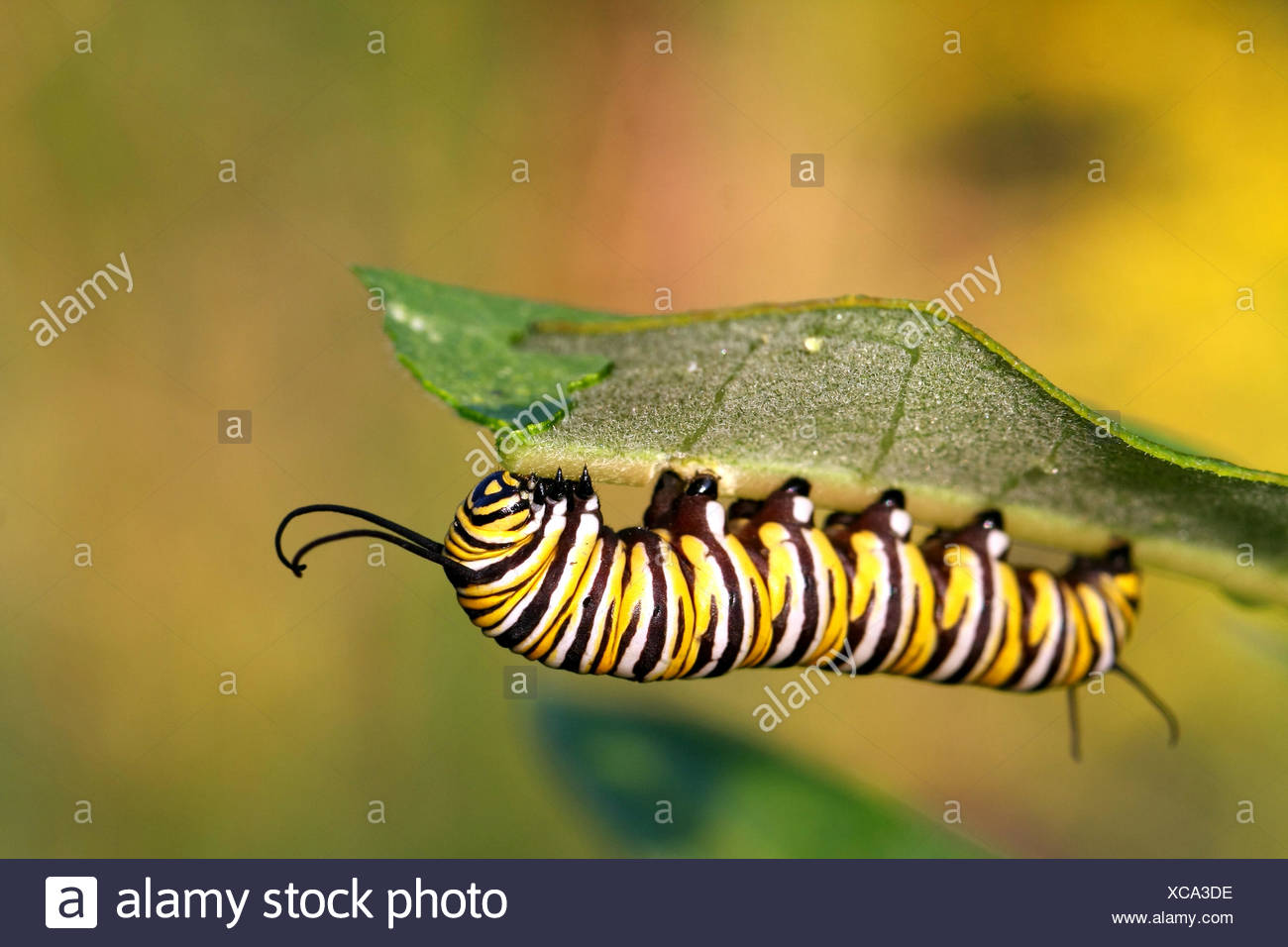 Niedlich Frühling Schmetterlinge Färbung Seiten Zeitgenössisch ...