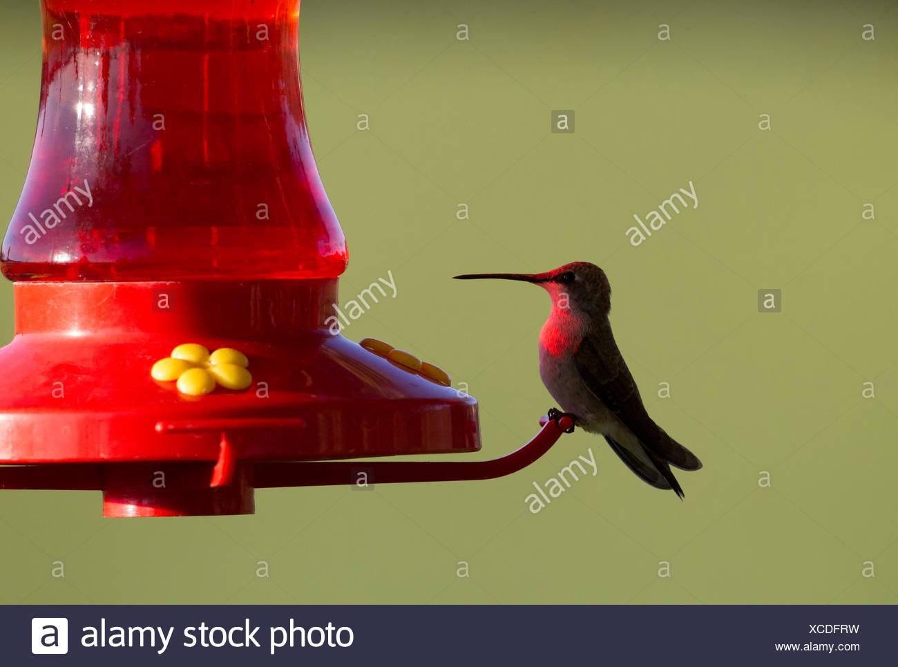Wunderbar Kolibri Malvorlagen Zum Ausdrucken Fotos - Beispiel ...