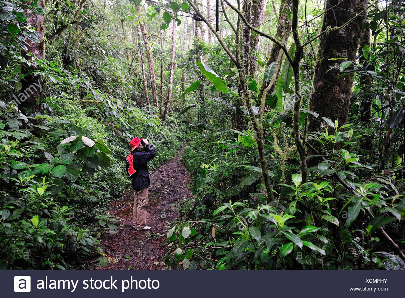 Frau fernglas tropical regenwald nebelwald regenwald person