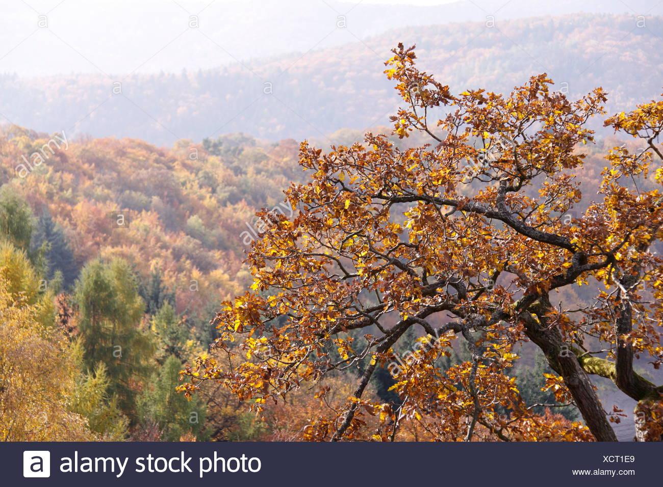 Großartig Herbst Baum Färbung Seite Fotos - Malvorlagen-Ideen ...