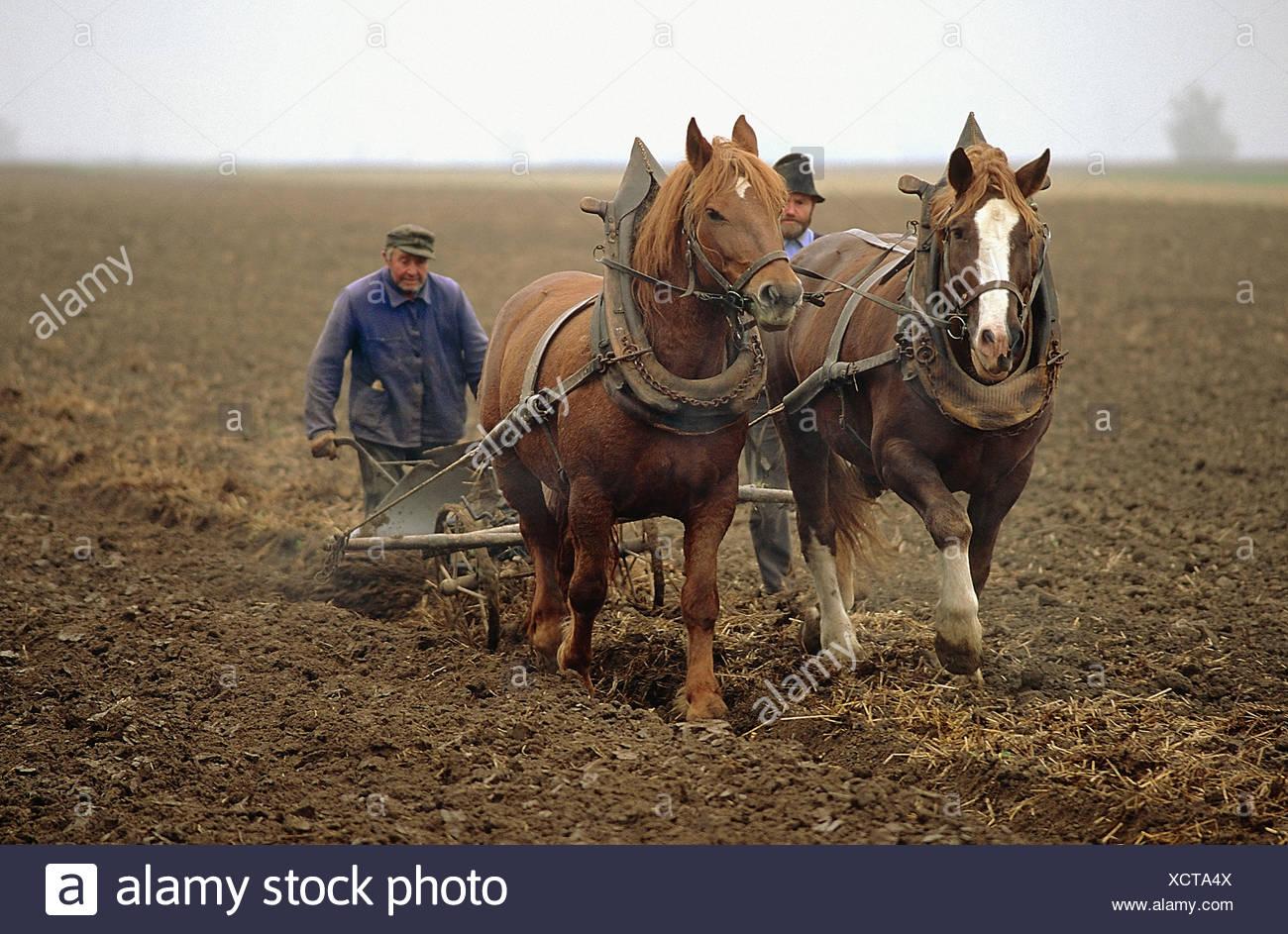 Bauern pflügen mit Pferden Stockfoto, Bild: 283276586 - Alamy