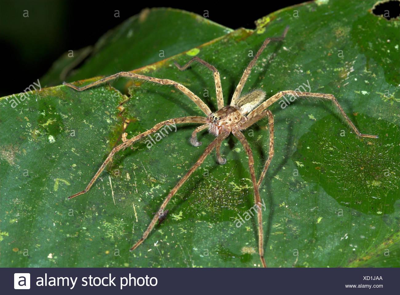 Beste Spider Farbe Seite Fotos - Beispiel Wiederaufnahme Vorlagen ...