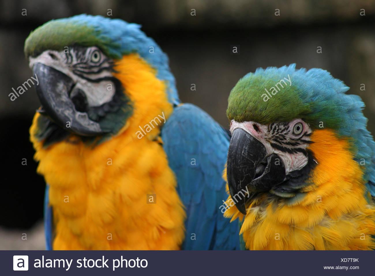 Niedlich Blaue Vogel Färbung Seite Ideen - Beispiel Business ...