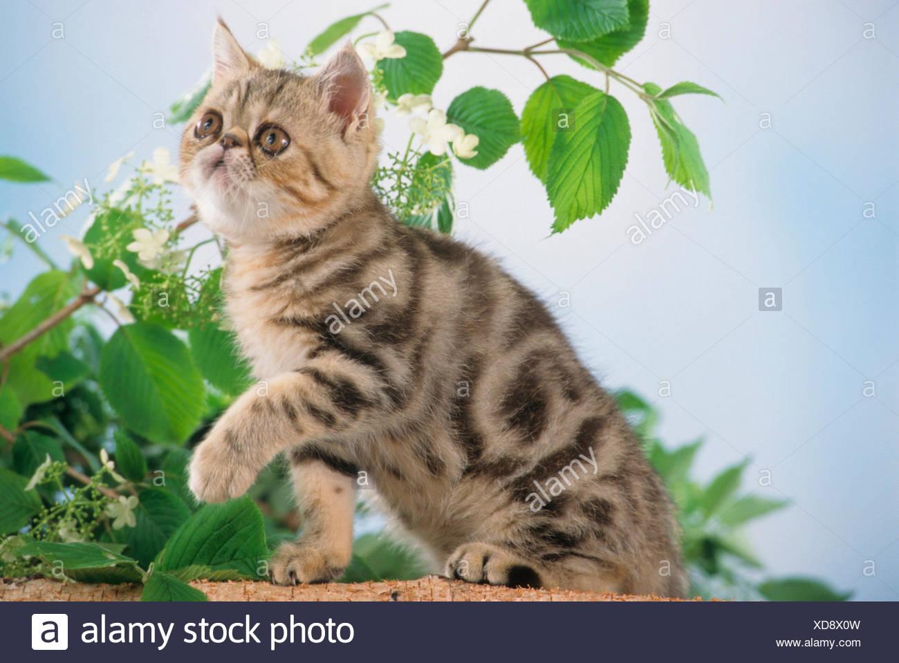 Großartig Kätzchen Färbung Bilder Bilder - Malvorlagen-Ideen ...