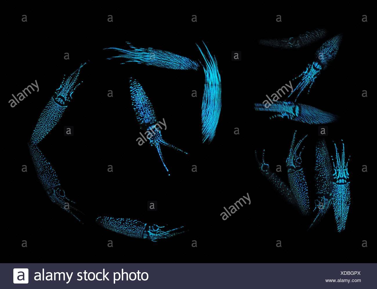 Wunderbar Glühwürmchen Tintenfisch Färbung Seite Galerie - Beispiel ...