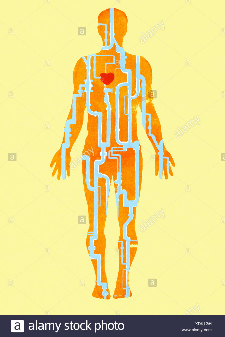 Tubos conectados al corazón dentro del cuerpo humano Foto & Imagen ...