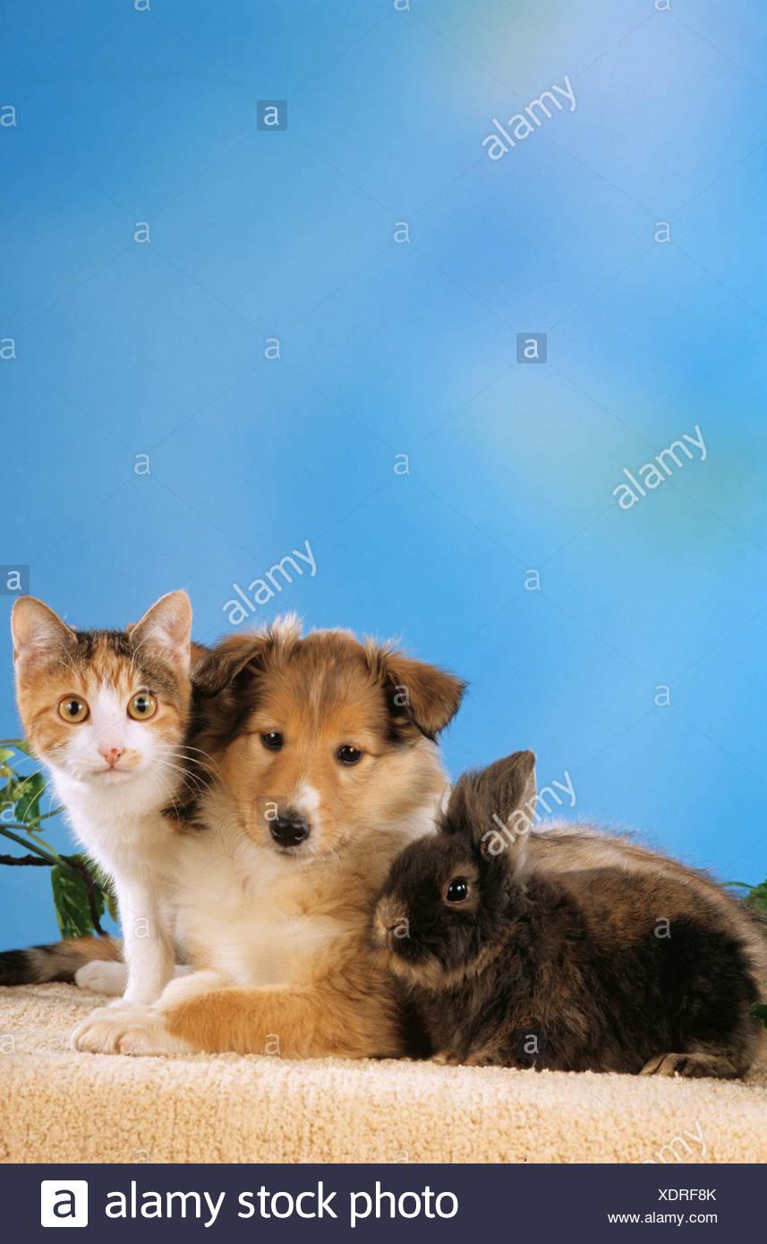 Tolle Kätzchen Und Welpen Malvorlagen Fotos - Malvorlagen Von Tieren ...