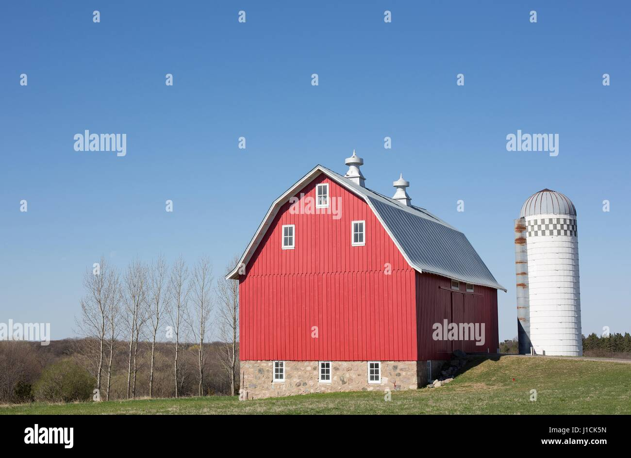 Cow on green pasture with red barn with grain silo royalty free stock - A Red Barn And Grain Silo In Minnesota Stock Image