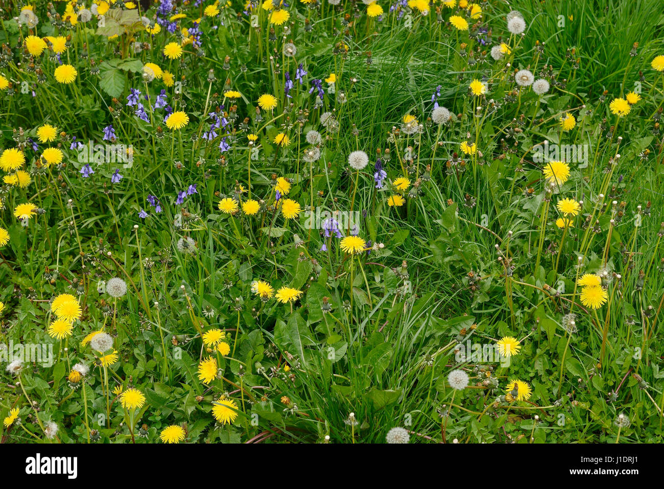 wild garden weeds stock photos u0026 wild garden weeds stock images