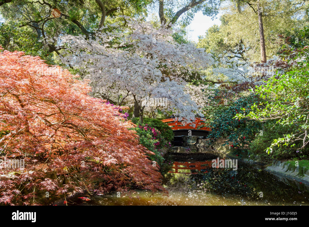 Descanso stock photos descanso stock images alamy Cherry blossom festival descanso gardens