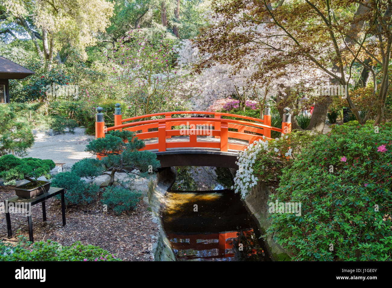 Japanese Garden Cherry Blossom Bridge japanese garden bridge nature stock photos & japanese garden
