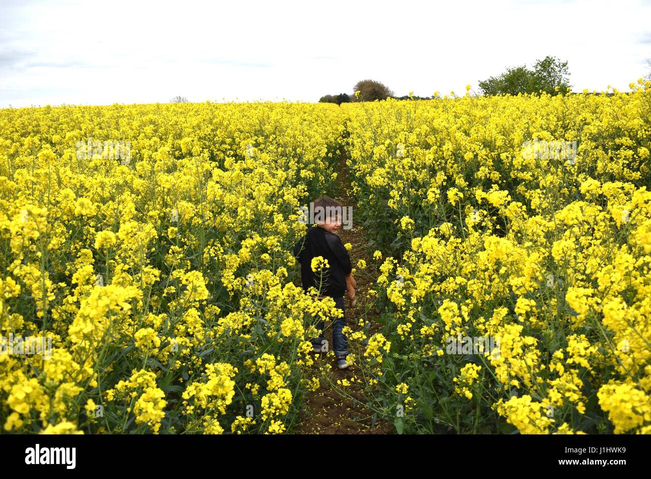 4 Year Old Little Boy In A Rapeseed Canola Field Of Yellow Flowers