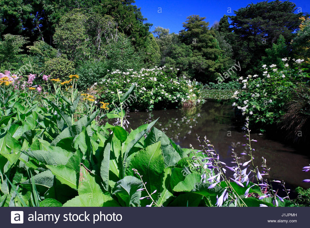 Feuillage stock photos feuillage stock images alamy for Bassin aquatique