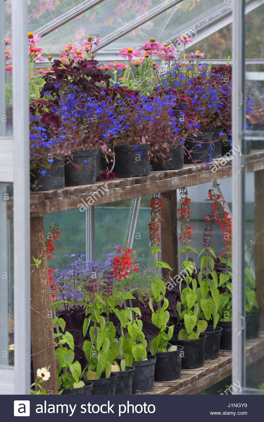 Greenhouse staging stock photos greenhouse staging stock - Wooden staging for greenhouse ...