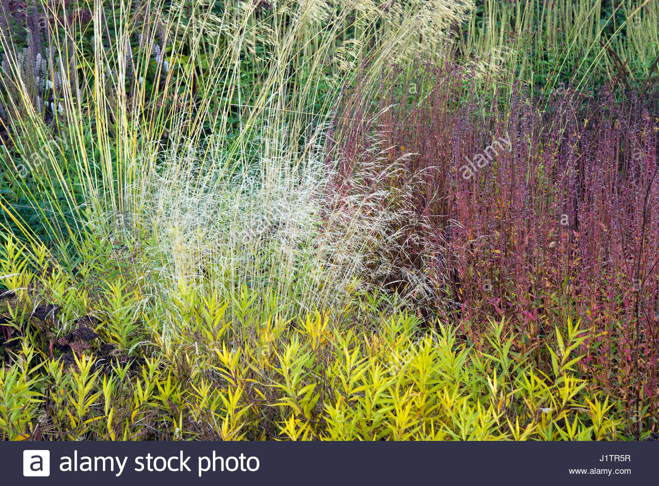 Oudolf borders stock photos oudolf borders stock images for Small ornamental grasses for borders