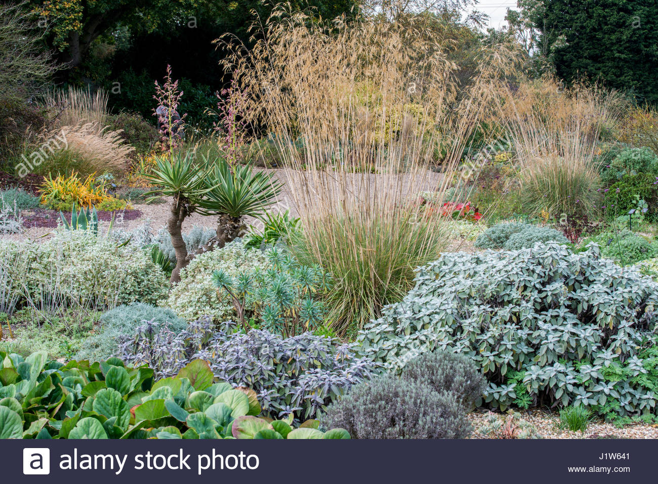 Beth Chatto Dry Garden Stock Photos Beth Chatto Dry