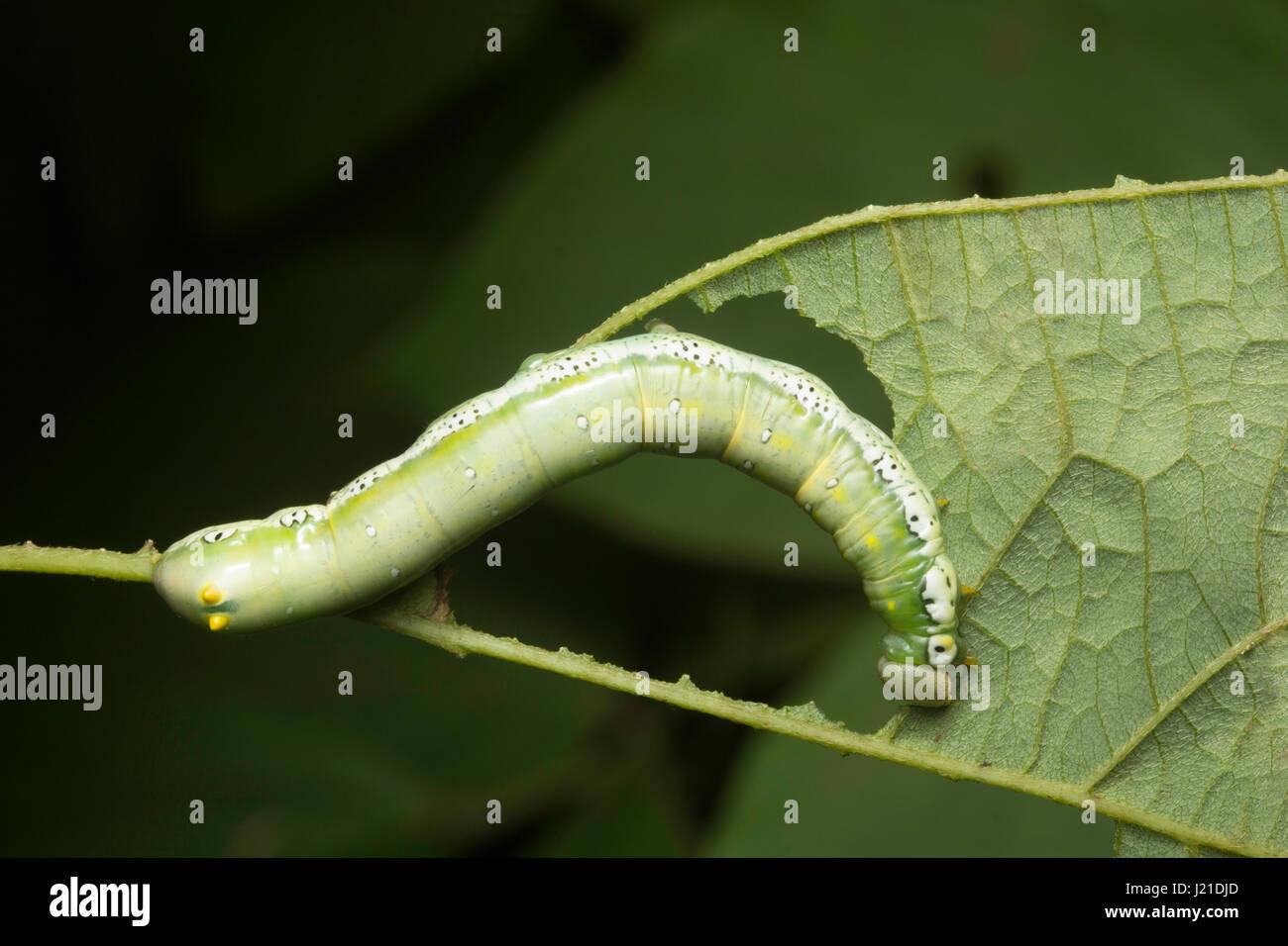 colourful caterpillar stock photos u0026 colourful caterpillar stock