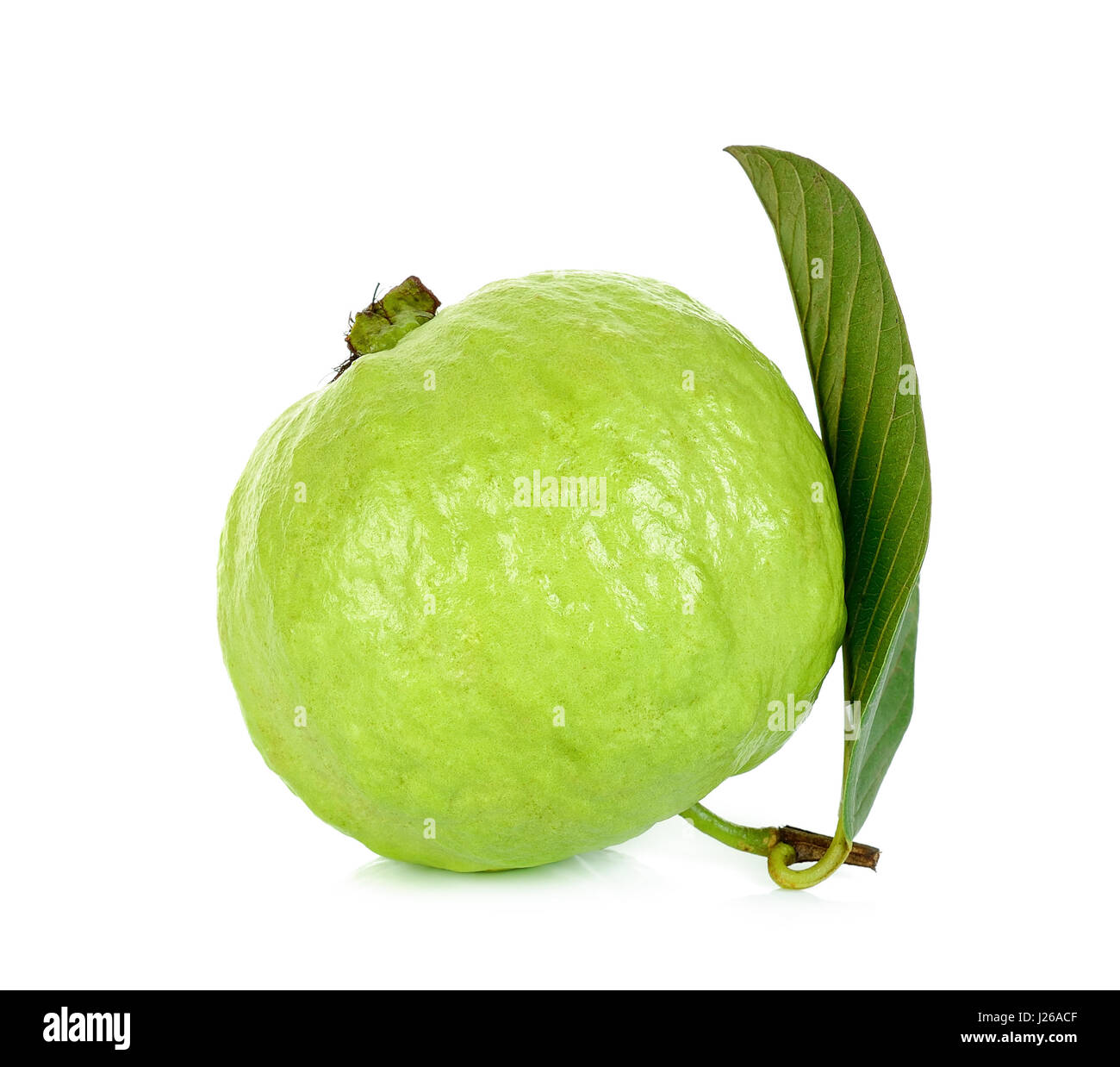 Guava Fruit Isolated On The White Background Stock Image Guava Stock Photos  & Guava Stock Images