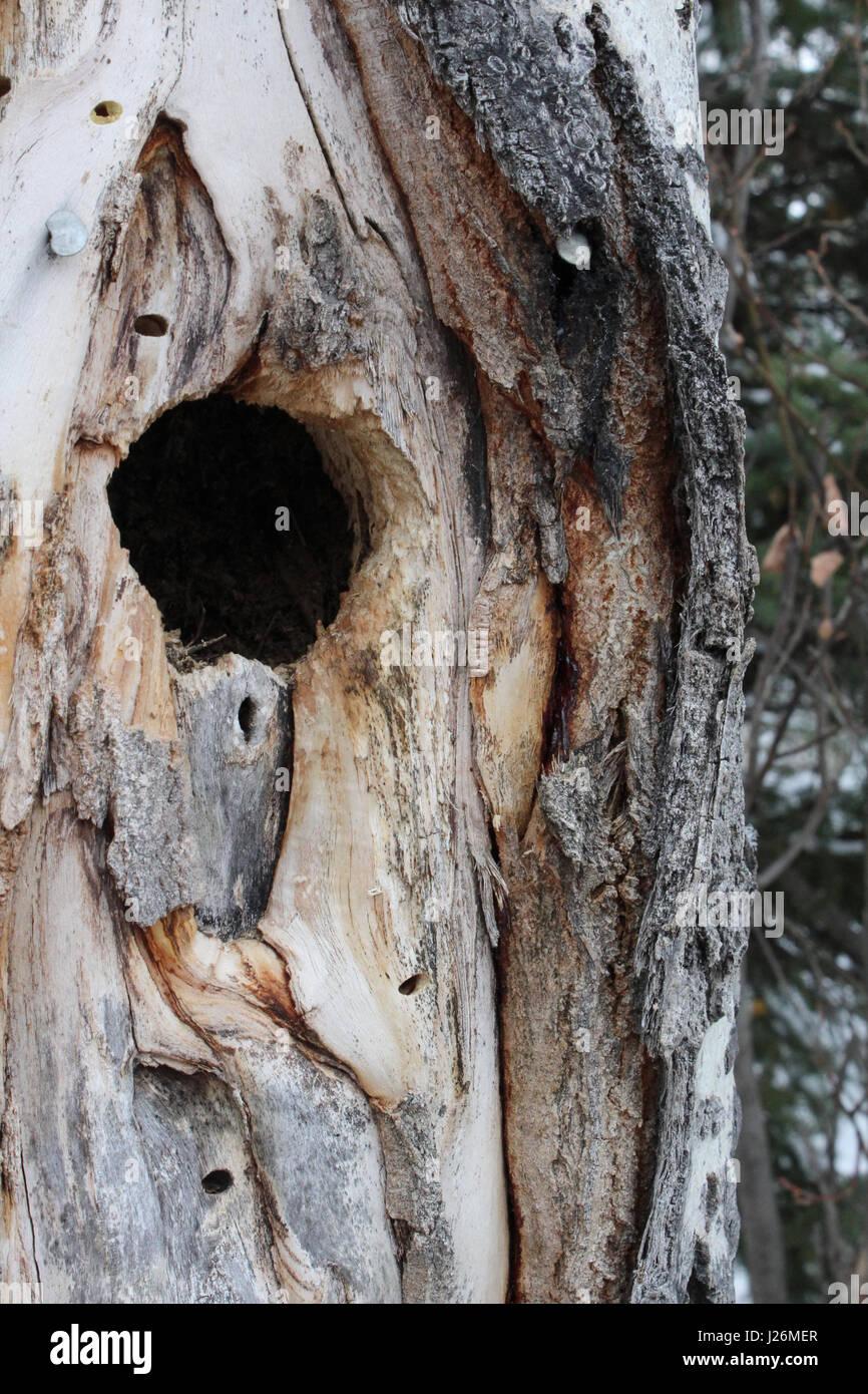 Bird nest in tree hole