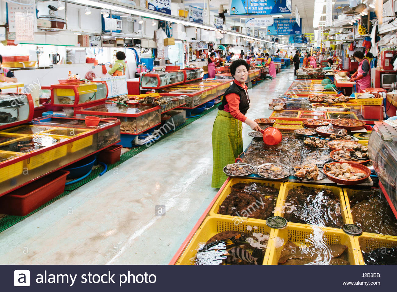 Seafood tank stock photos seafood tank stock images alamy for Live fish store