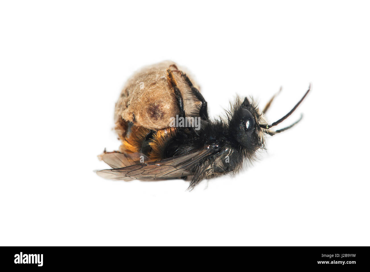 bees cut out stock images u0026 pictures alamy