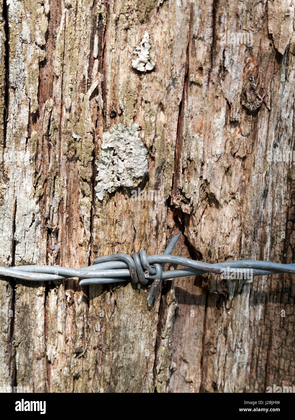 Barbed wire wrapped around farmland boundary timber fence post Stock ...