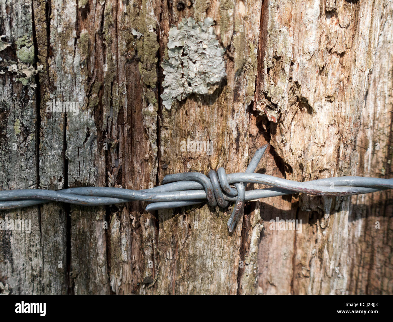Wooden Fence Bark Stock Photos & Wooden Fence Bark Stock