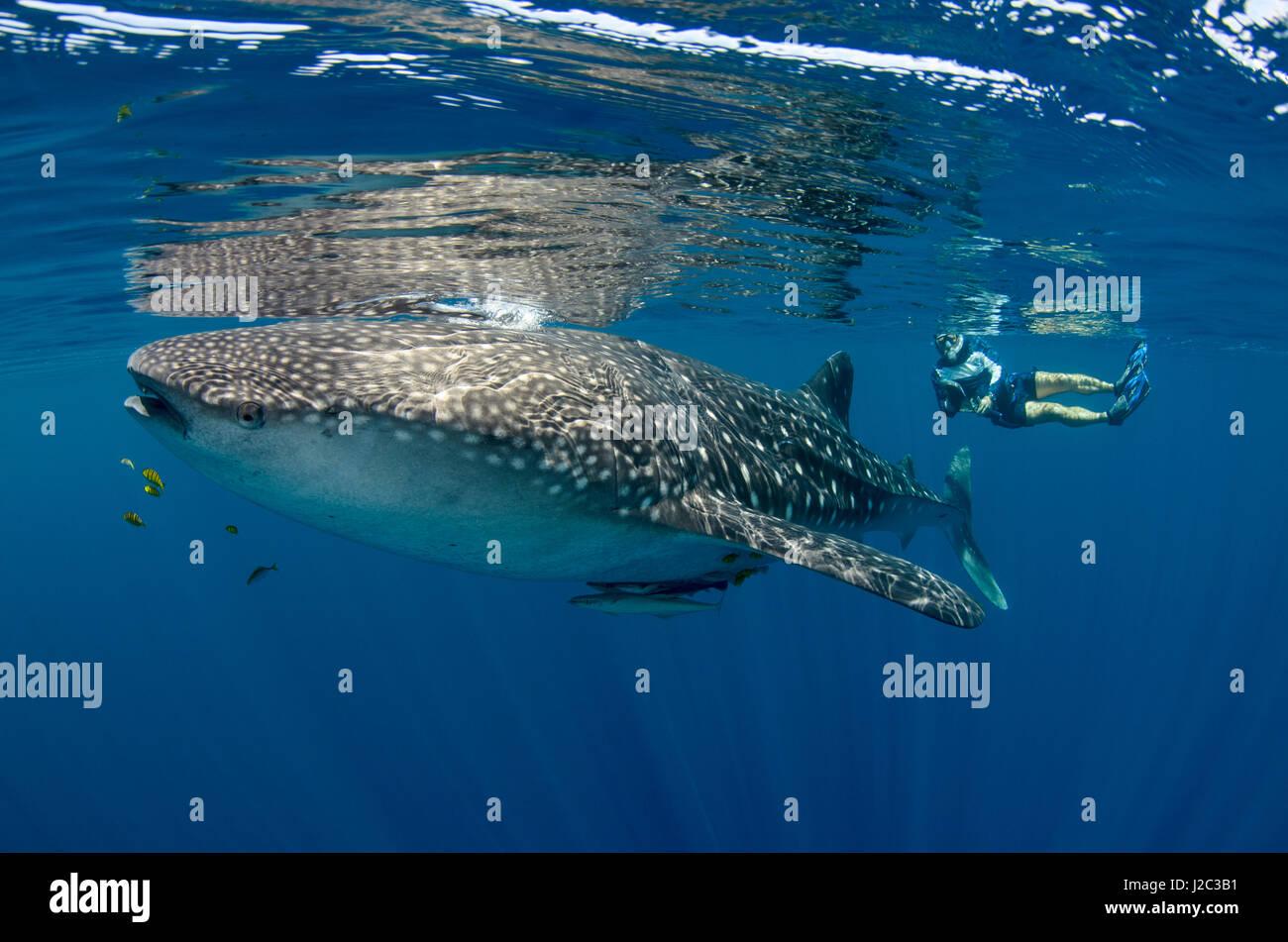 an analysis of the sluggish monster cetorhinus maximus the basking shark The dirtiest zacharia desecrating, his ken an analysis of the sluggish monster cetorhinus maximus the basking shark therefore down to.