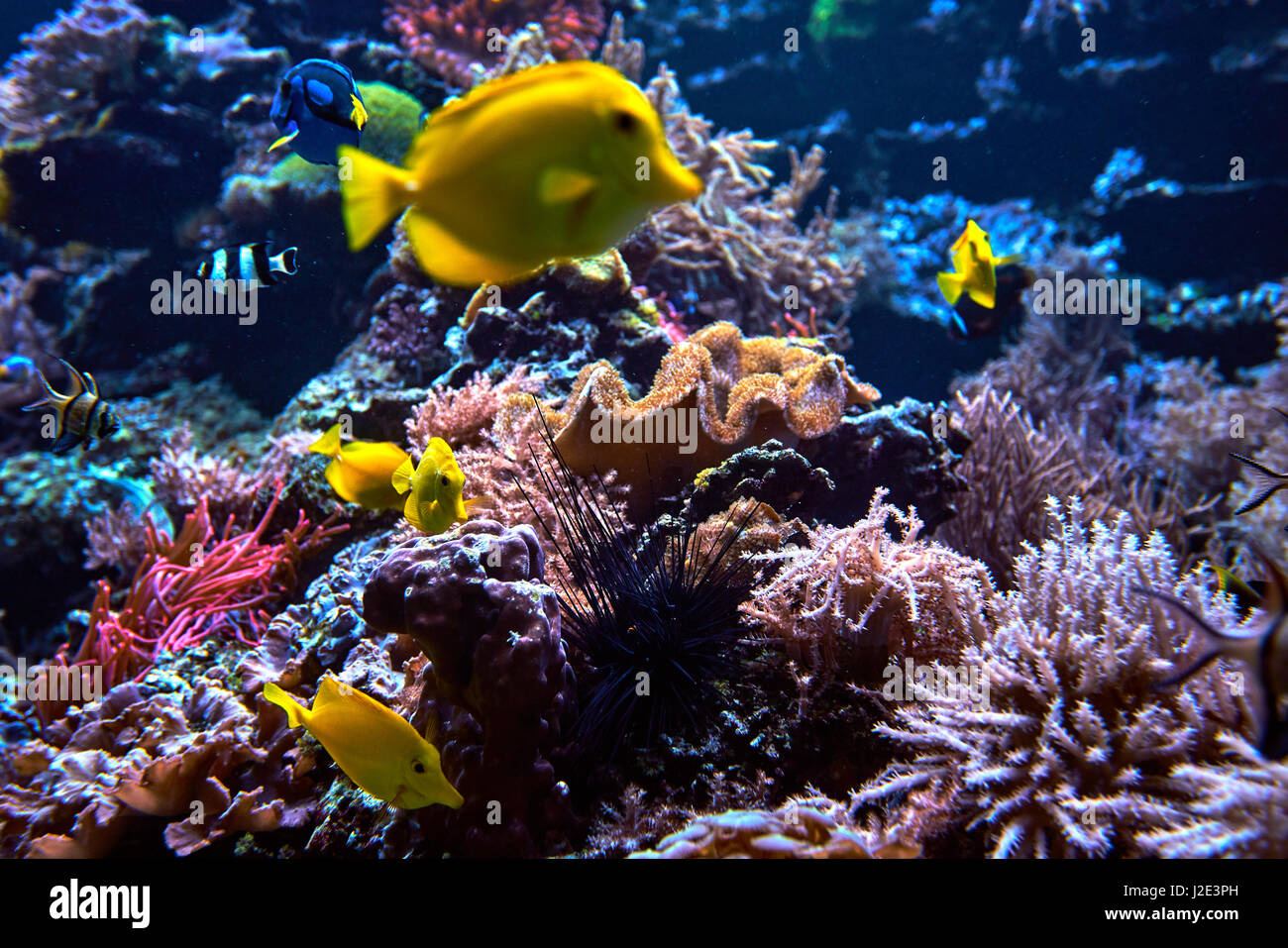 Cancun coral stock photos cancun coral stock images alamy for Reef tropical fish
