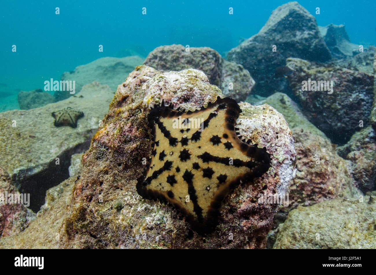 Chocolate Chip Starfish Stock Photos & Chocolate Chip Starfish ...
