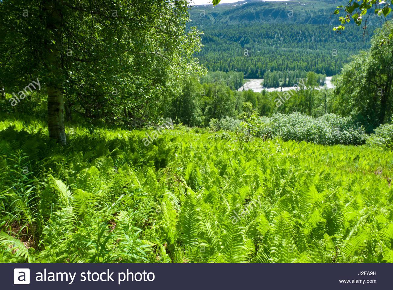 Alaska matanuska susitna county talkeetna - View Of The Susitna River From A Lush Green Hillside Above It Talkeetna Mountains